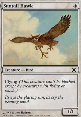 10th Edition: Suntail Hawk