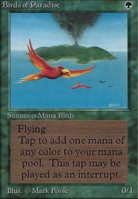 Beta: Birds of Paradise