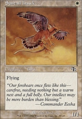 Judgment Foil: Suntail Hawk