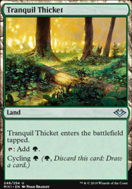 Modern Horizons: Tranquil Thicket