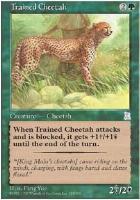 Portal 3K: Trained Cheetah