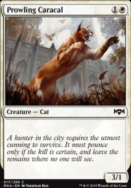 Ravnica Allegiance: Prowling Caracal