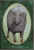 Unglued: Sheep Token